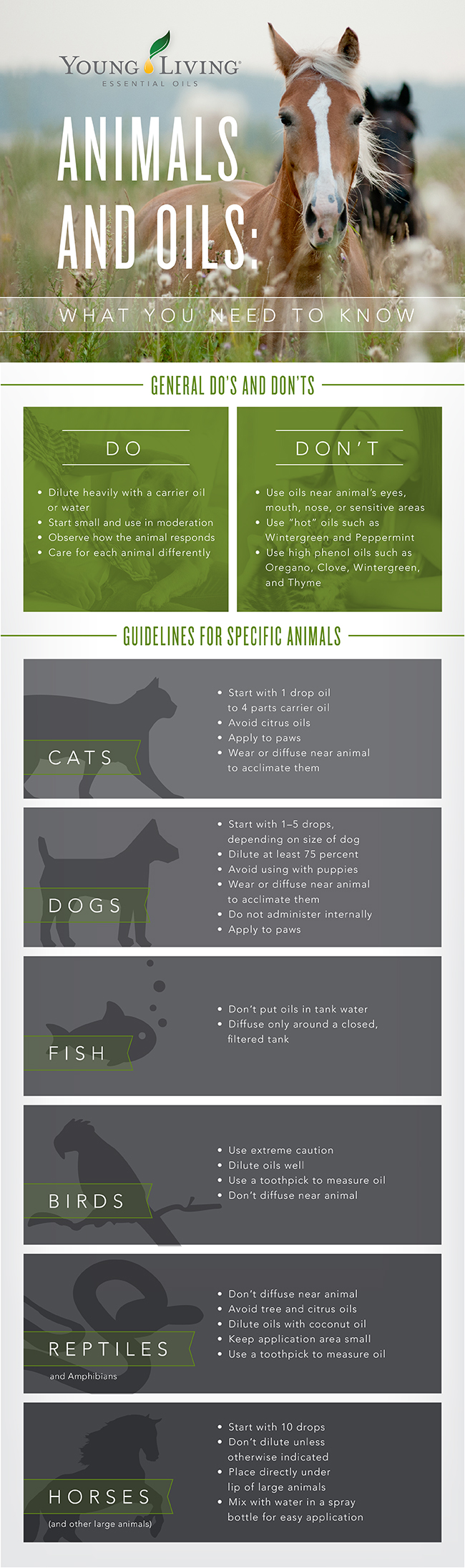 animals-and-pet-infographic.jpg